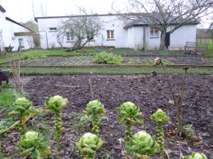 Meals at Totleigh include delicious local produce and vegetables from the garden